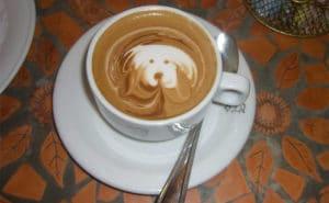 dog latte art